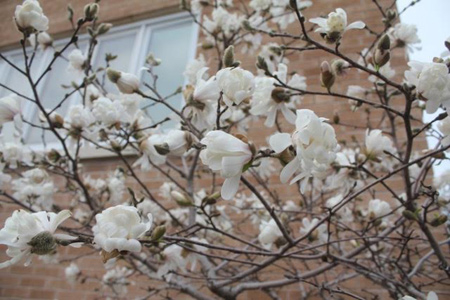 Flowering tree at Polk Business Center commercial office space leasing